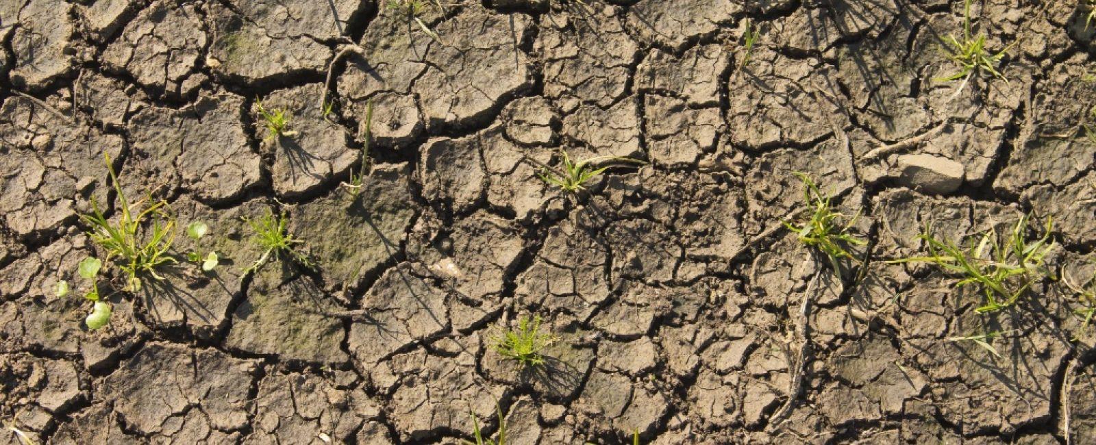 b221c4a5ff Moneyfarm: Ormai il clima è una variabile nel valore delle azioni ...