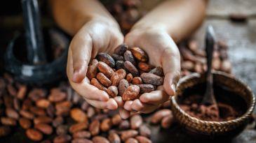 I prezzi del cacao si sciolgono con il caldo, grano e olio i migliori