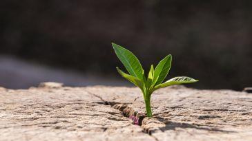 Transizione... o collaborazione ecologica?