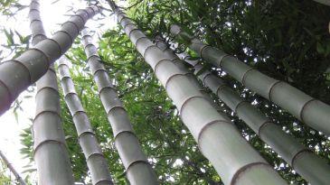 Genesi Life: puntando sul bambù il rendimento è detraibile