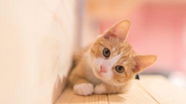 """Listini positivi ma senza recupero, è il """"rimbalzo del gatto morto"""""""