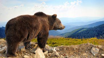 Il paese degli orsi: consigli di sopravvivenza per investitori incauti